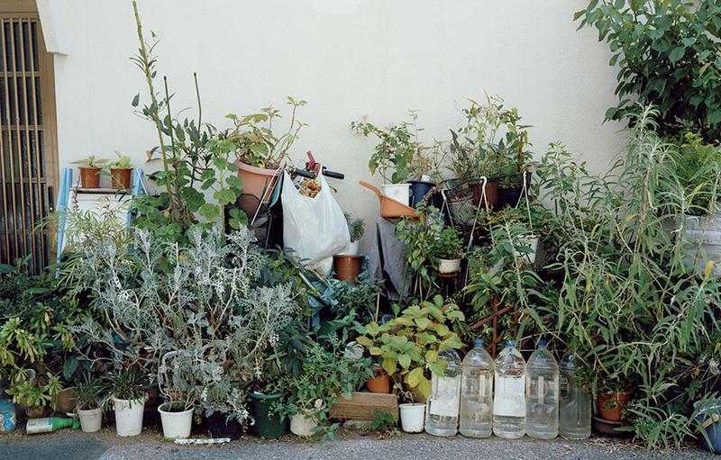 写真集「植木」より。©Yasuyuki Takagi