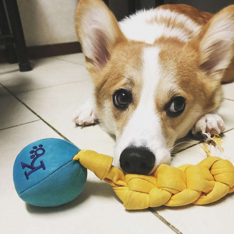 青と黄色のおもちゃで遊んでいる