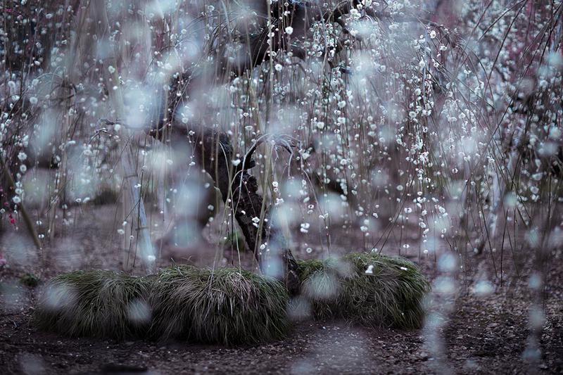プロ写真家が厳選!「美しい雨の...